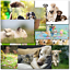 thumbnail 3 - Doodlecards Pack of 10 Standard Size Dog Lovers Birthday & Blank Cards