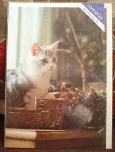 Lovely-Grey-And-White-Cat-In-Basket-Blank-Greeting-Card