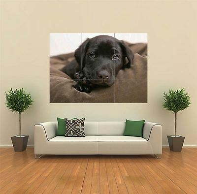 BLACK LAB PUB DOG ANIMAL DOG  NEW GIANT POSTER WALL ART PRINT PICTURE X1314