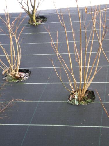 0,58€//m² Bodengewebe Gartenvlies Unkrautblocker 1,05 1,65 2,10 3,30 Meter