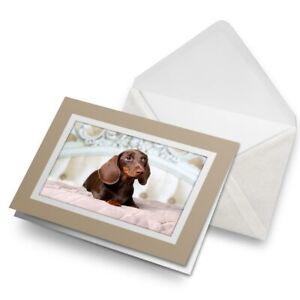 Greetings-Card-Biege-Pampered-Dachshund-Puppy-Dog-21440