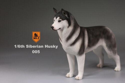 1//6 Scale Mr.Z Siberian Husky Model Dog 005 The Simulation Animal Series Figure