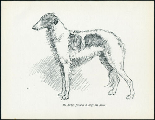 BORZOI LOVELY IMAGE VINTAGE 1930/'S DOG ART PRINT by KF BARKER