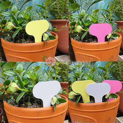100pc 6 x10cm Plastic T-Type Plant Shrub Tree Labels Tag Nursery Garden  Markers