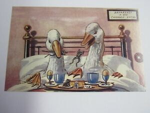 New Reproduction 1910 Breakfast In Bed Postcard Ducks and Frogs Unused