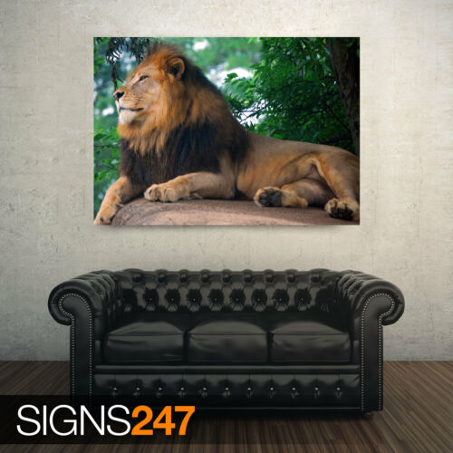 Picture Poster Print Art A0 A1 A2 A3 A4 LION KING OF ZOO 3387 Animal Poster