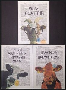 3 X Cow Goat Prints Vintage Dictionary Page Wall Art Picture Funny