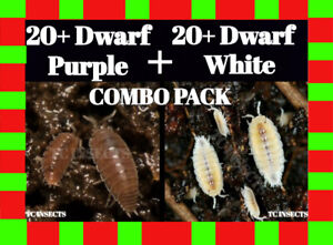 Live-ISOPOD-COMBO-PACK-20-Dwarf-White-and-20-Dwarf-Purple-terrarium-isopods