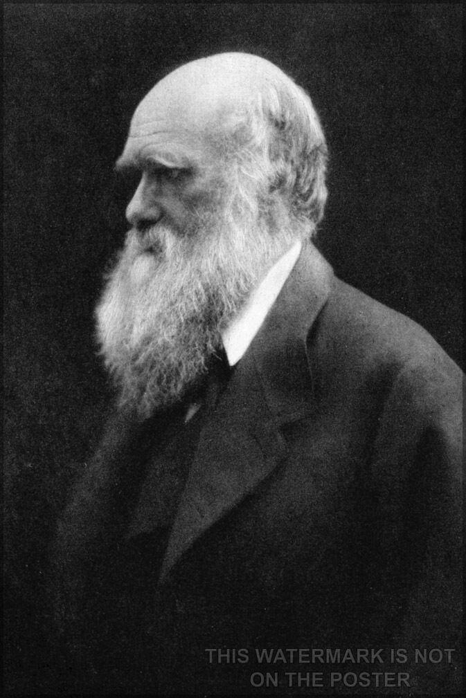 Plakat, Viele Größen; Charles Darwin P3 Julia Margaret