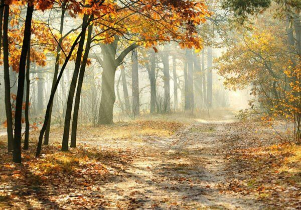 Autumn Whisper Misty Morning Forest 3D Full Wall Mural Photo Wallpaper Home Decl