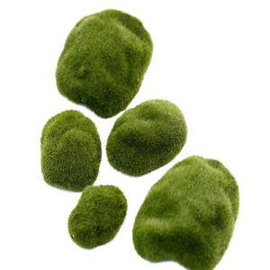 6-8cm-Mini-Grass-Figurine-Craft-Plant-Pot-Fairy-Dollhouse-Decor-Garden-Ornamenw