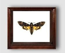 Real framed DEATHS HEAD Moth in the movie silence of the lambs!!