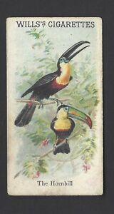 WILLS-ANIMALS-amp-BIRDS-THE-HORNBILL