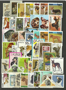 DOGS-Collection-Packet-of-50-Different-WORLD-Stamps
