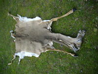 Taxidermy Tanned Whitetail Deer Buck Lifesize Skin For Lifesize Mt No Antlers