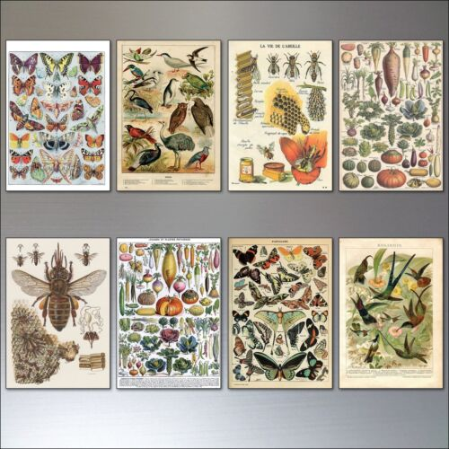 Vintage Victorian Birds Bees Butterflies and Botanical fridge magnets set of 8