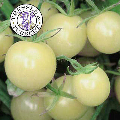 Rare Snow White Cherry Tomato - 10 seeds - UK SELLER