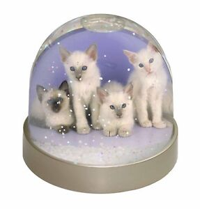 Details About Cute Balinese Kittens Photo Snow Globe Waterball Stocking Filler Gift Ac 88gl