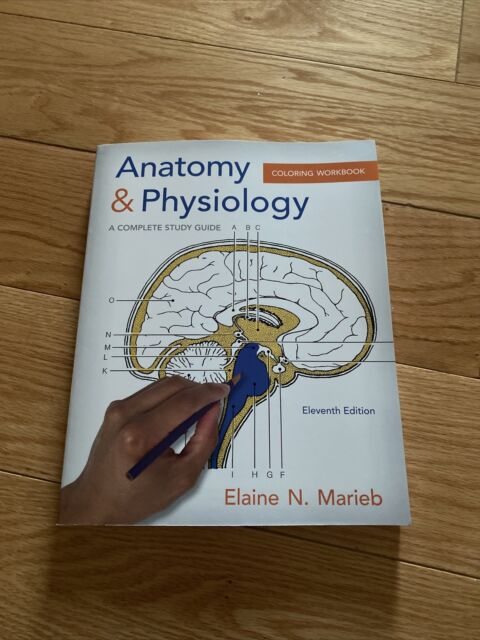 Anatomy And Physiology Coloring Workbook : A Complete Study Guide By Elaine  N. Marieb (2014, Trade Paperback) For Sale Online EBay