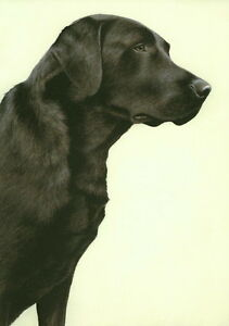 Nigel-Hemming-JUST-DOGS-BLACK-LABRADOR-Labs-Retrievers-Gun-Dog-Limited-Edition