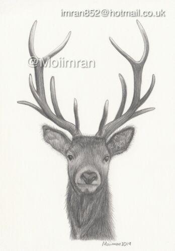 Drawing of Deer Stag with Antler Animal Wildlife Sketch Art work By Moiimran