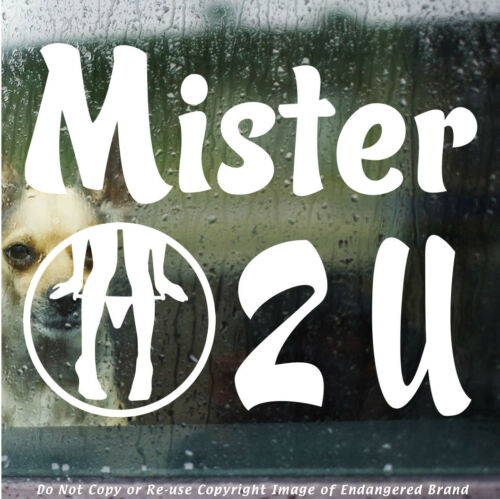 Panty Dropper Mister 2 U Turbo Low Boost JDM Funny Truck Car Sticker Decal