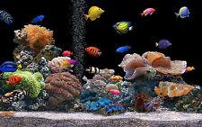 VIRTUAL FISH TANK AQUARIUM DVD RELAXATION SOOTHING SLEEP AID