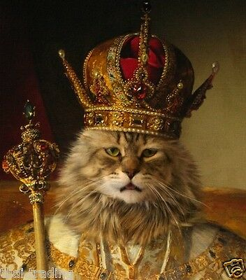 """King Cat With Crown Animal Photo Fridge Magnet 2""""x 3"""" Collectibles ..."""