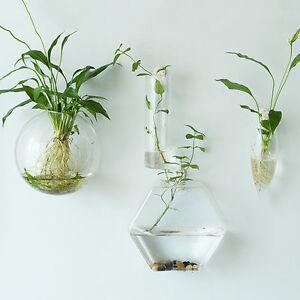 Cute Glass Wall Vase//Hexagon Wall Terrarium//Wall Bubble Bowl ...
