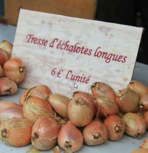 French Shallot 50 Seeds Allium cepa cuisse de poulet echalion