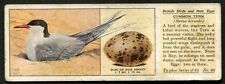 1936 Typhoo Tea - British Birds & their Eggs - No20 Common Tern