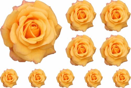 Yellow Painted Rose Flower Stickers Graphics Nursery Wall Window Decoration Art