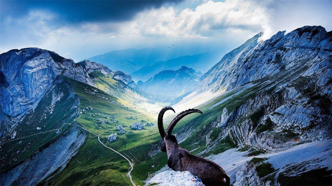 3D Schneeberg Himmel 863 Tapete Wandgemälde Tapeten Bild Bild Bild Familie DE Jenny | 2019  | Deutsche Outlets  | Schenken Sie Ihrem Kind eine glückliche Kindheit  93b806