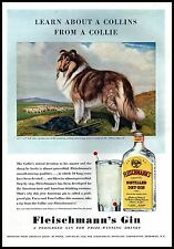 PUBBLICITA' FLEISCHMANNS GIN CANE DOG COLLIE PASTORE SCOZZESE PECORE 1940