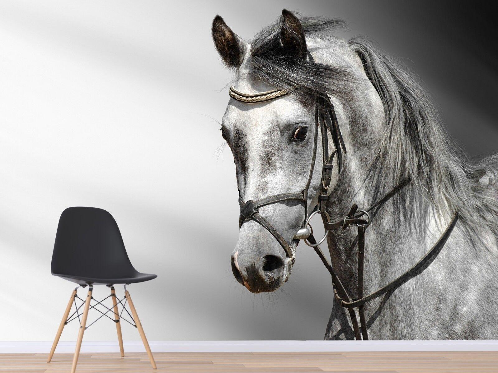 3D Sketch Animal Horse 225 Wallpaper Mural Wallpaper UK Jenny