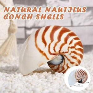 11-13 cm Naturel Nacré Nautilus coquilles de conque, Corail Collectible Ornements mer