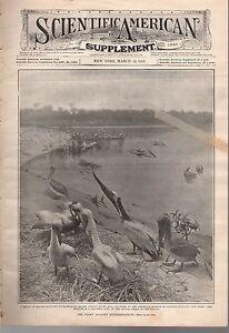 1908-Scientific-American-Supp-March-14-Recent-aeroplanes-Birds-to-be-extinct