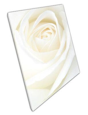 large Single white cream Rose flower Floral Art Print Poster X1834