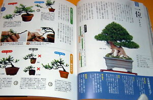 Make-BONSAI-understands-with-photographs-book-from-japan-japanese-rare-0096