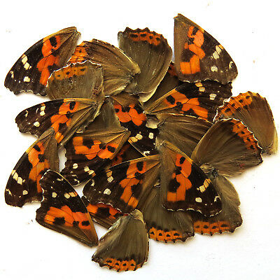 32 pcs REAL BUTTERFLY wing jewelry butterfly material ooak fairy artwork #10