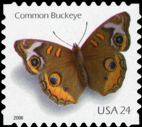 2006 24c Common Buckeye Butterfly, Single from Pane Sco