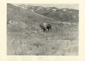 FREDERIC-REMINGTON-AMERICAN-OLD-WEST-SOLITUDE-SINGLE-BUFFALO-ON-THE-PLAINS