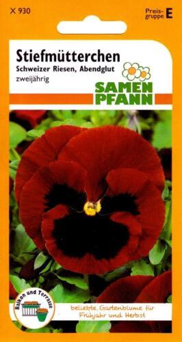 Stiefmütterchen Schweizer Riesen Abendglut für Frühjahr /& Herbst Blumen Samen