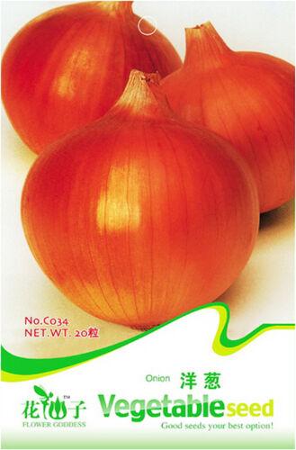 Purple Onion Seeds 20 Seed Allium Cepa Bulb Onion Vegetable Garden Seed Hot C034