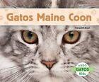 Gatos Maine Coon by Meredith Dash (Hardback, 2014)