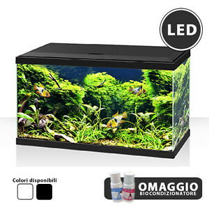 Askoll ciano acquario in vetro aqua 60 completo for Cerco acquario per tartarughe