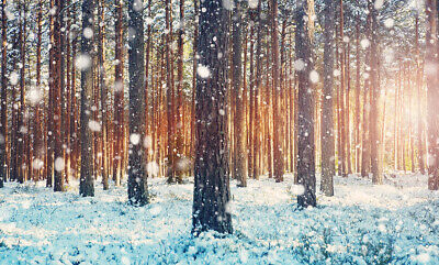 8x12 FT Nature Vinyl Photography Backdrop,Oak Tree at Sunset Frozen Wintertime Snowy Field Evergreen Forest Evening Scenery Background for Photo Backdrop Baby Newborn Photo Studio Props