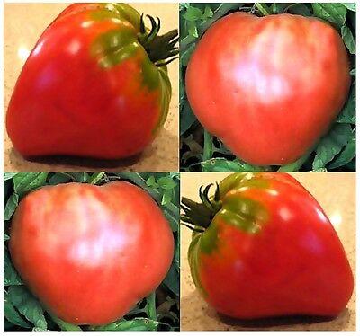 GERMAN RED STRAWBERRY Tomato Seeds - HEIRLOOM - AKA big Texas strawberry 85 Days