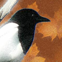 The Canadian Magpie