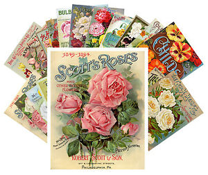 Postcards-Pack-24-cards-Roses-Vintage-Seed-Pocket-Garden-Flowers-CC1015